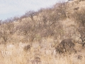 Dornsavanne - Trockenzeit