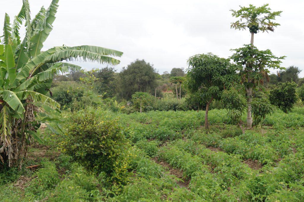 14. Bewässerte Felder
