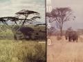 Kenia Trockensavanne
